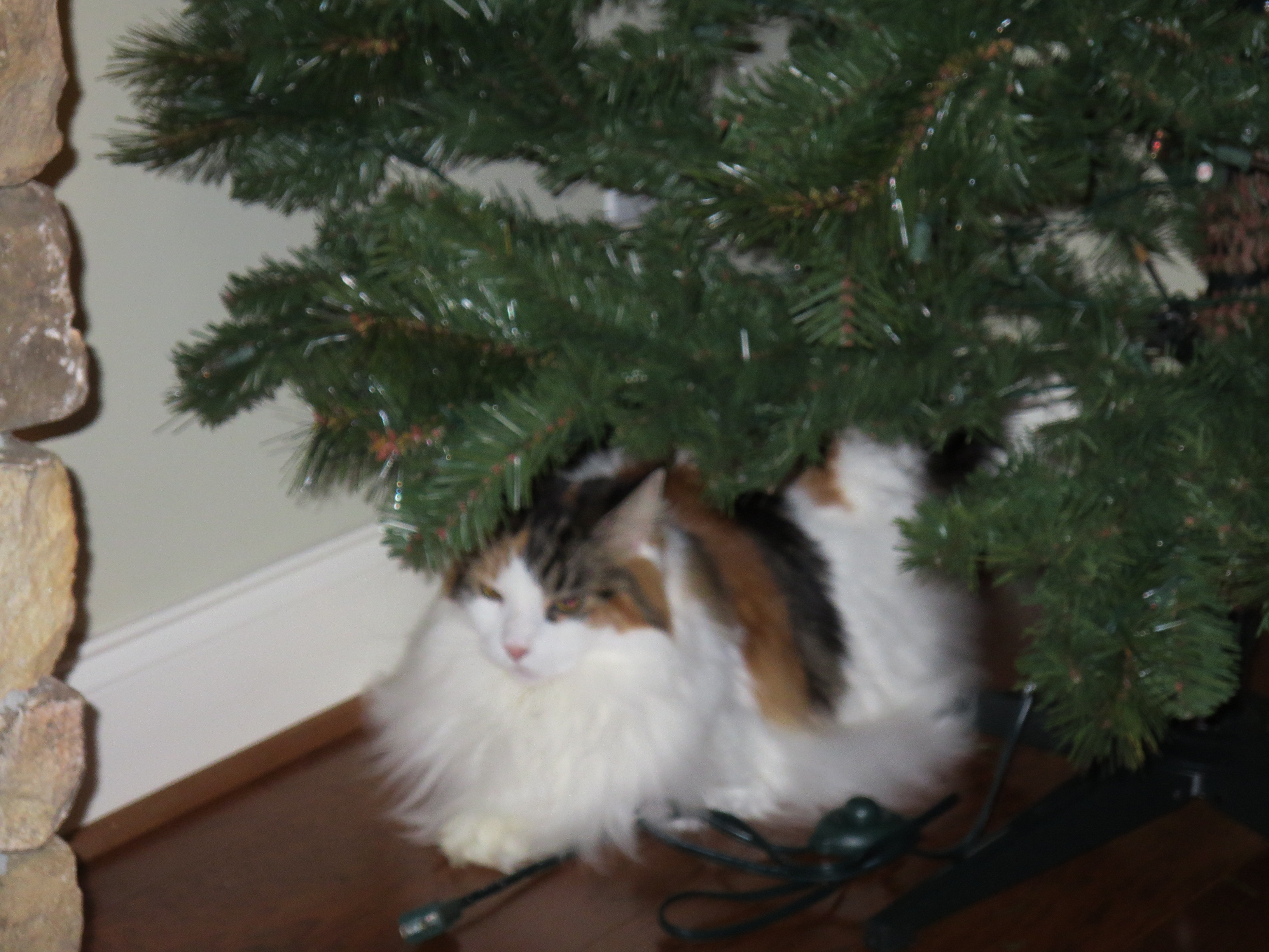 christmas-2013-ruby-waiting-for-us-to-decorate-the-tree-2014_02_18-18_15_37-utc