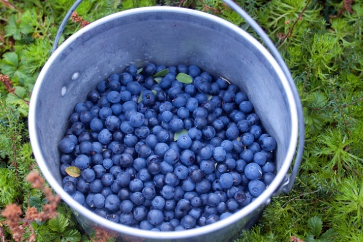 buckets-blueberries
