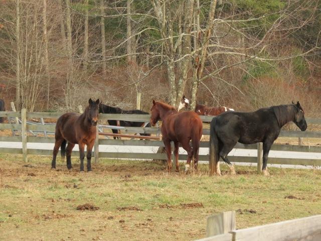 Sweet horses!