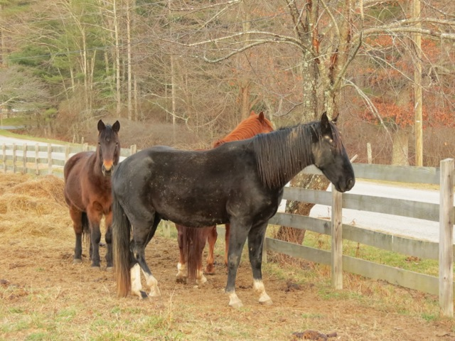 Crabtree Falls Horses2