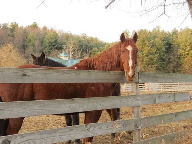 Crabtree Falls Horses3