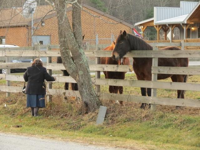 Crabtree Falls Horses6
