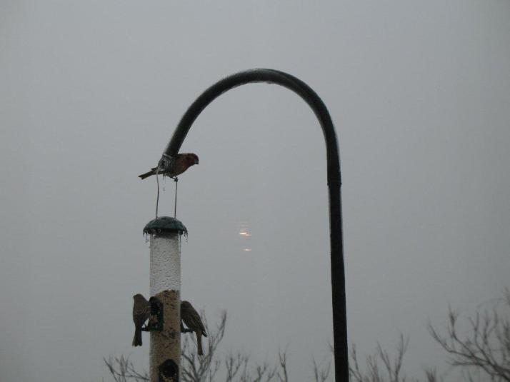 Birds at the feeder on the deck of our old house on a very cold and icy day!