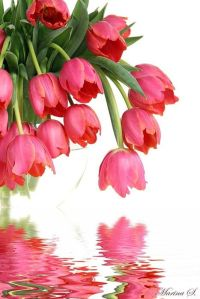 0229c4e77b44f96bdba572a00fdeb970spring tulips